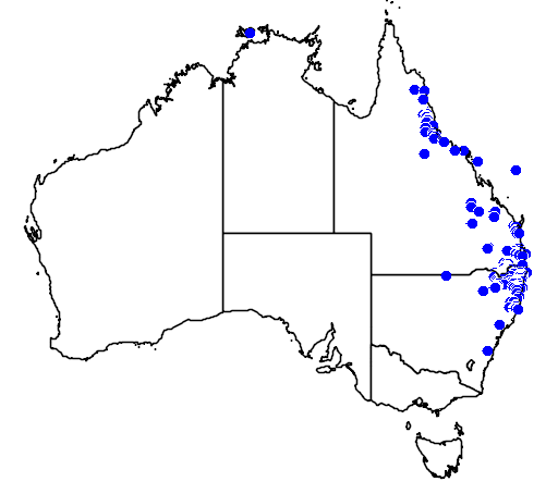 distribution map showing range of Leptospermum brachyandrum in Australia