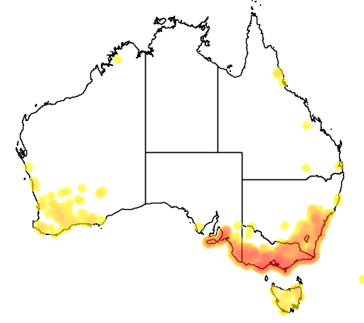 distribution map showing range of Leptospermum continentale in Australia