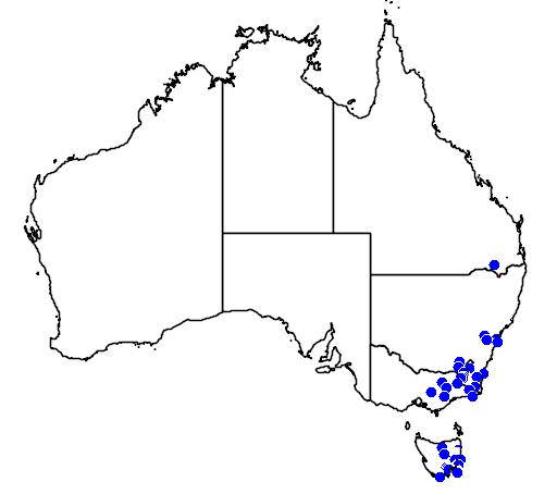 distribution map showing range of Leptospermum grandiflorum in Australia