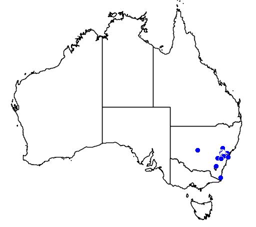 distribution map showing range of Leptospermum macrocarpum in Australia