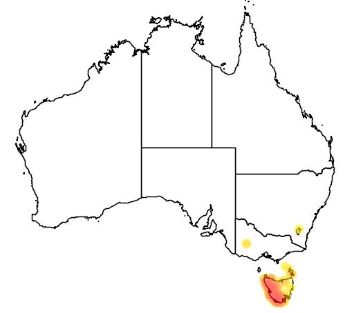 distribution map showing range of Leptospermum nitidum in Australia