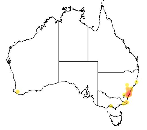 distribution map showing range of Leptospermum rotundifolium in Australia