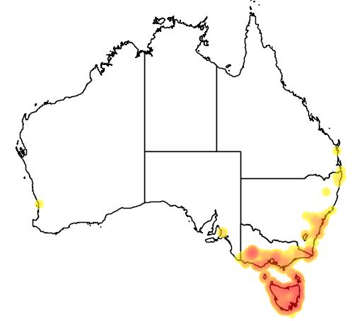 distribution map showing range of Leptospermum scoparium in Australia