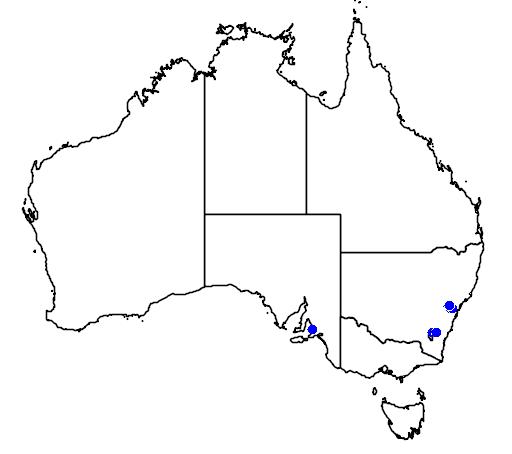 distribution map showing range of Leptospermum spectabile in Australia