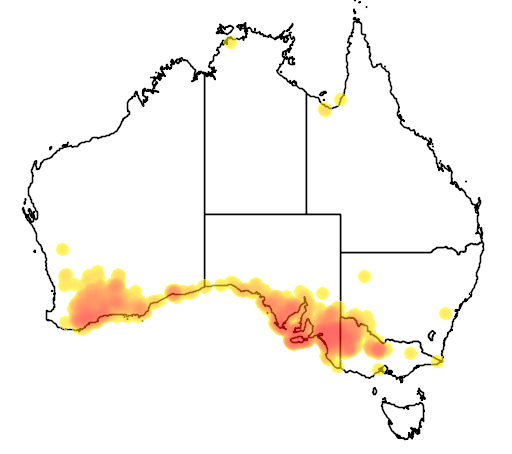 distribution map showing range of Lichenostomus cratitius in Australia