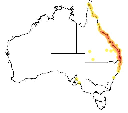 distribution map showing range of Lichenostomus fasciogularis in Australia