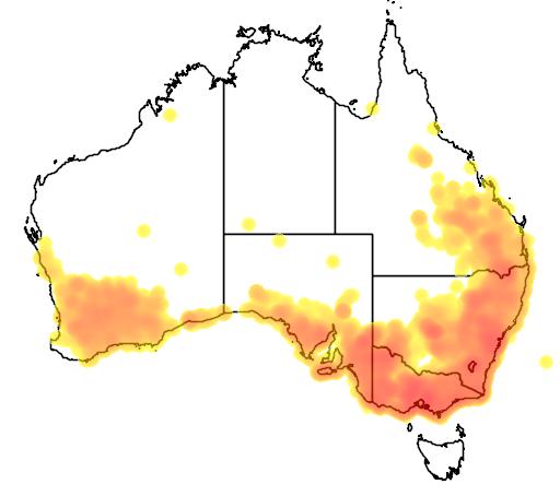 distribution map showing range of Lichenostomus leucotis in Australia
