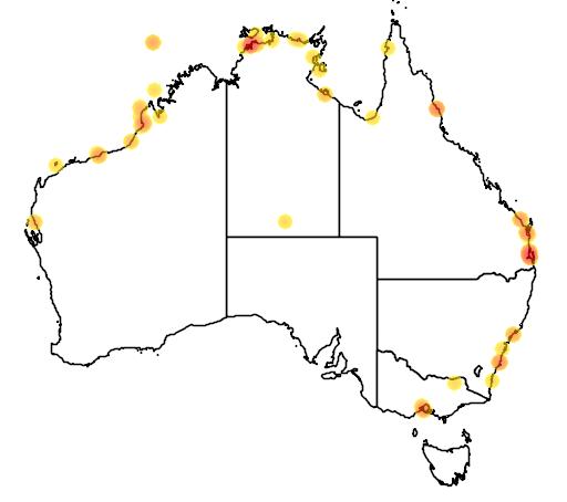 distribution map showing range of Limnodromus semipalmatus in Australia