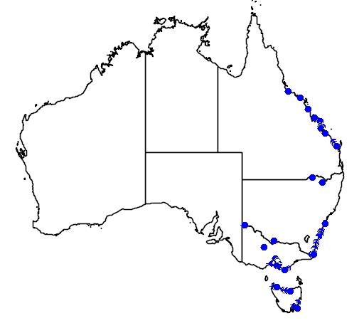 distribution map showing range of Limonium australe in Australia