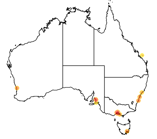 distribution map showing range of Limosa haemastica in Australia