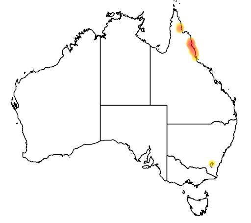 distribution map showing range of Linospadix minor in Australia