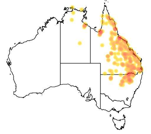 distribution map showing range of Litoria alboguttata in Australia