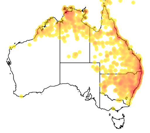 distribution map showing range of Litoria caerulea in Australia