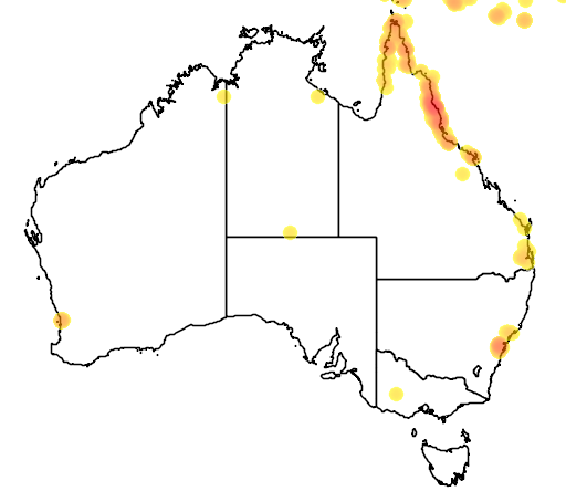 distribution map showing range of Litoria infrafrenata in Australia