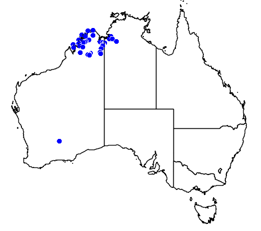 distribution map showing range of Litoria splendida in Australia