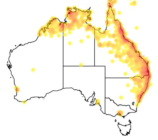 distribution map showing range of Lonchura castaneothorax in Australia