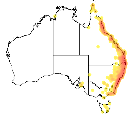 distribution map showing range of Lopholaimus antarcticus in Australia