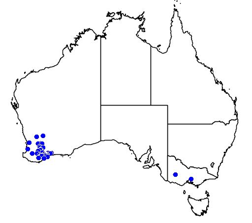 distribution map showing range of Lysiosepalum involucratum in Australia