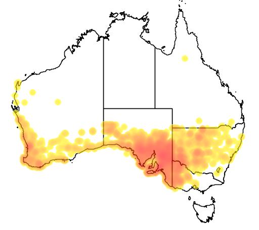 distribution map showing range of Macropus fuliginosus in Australia