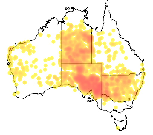 distribution map showing range of Macropus rufus in Australia