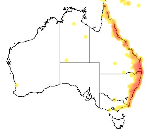 distribution map showing range of Macropygia amboinensis in Australia