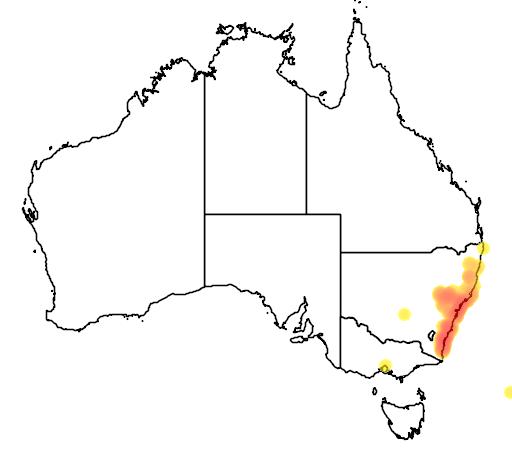 distribution map showing range of Macrozamia communis in Australia