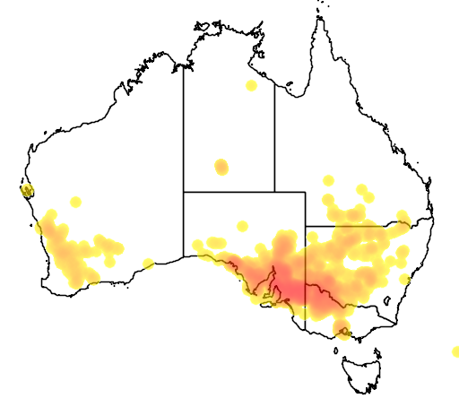 distribution map showing range of Maireana brevifolia in Australia