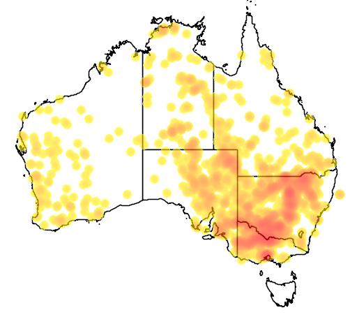 distribution map showing range of Marsilea drummondii in Australia