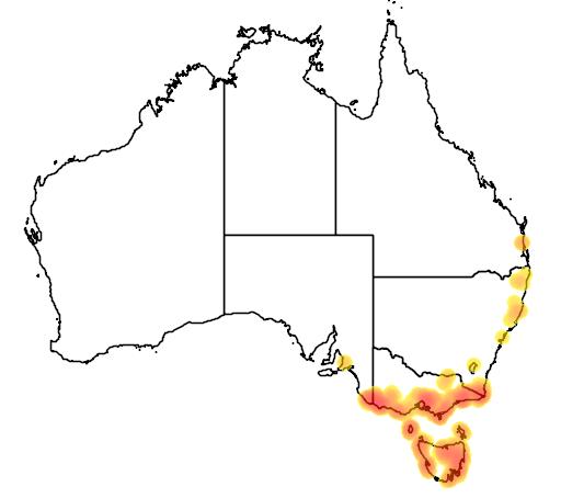 distribution map showing range of Mazus pumilio in Australia