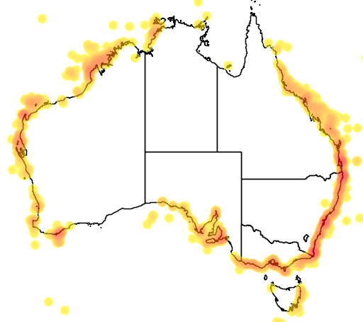distribution map showing range of Megaptera novaeangliae in Australia