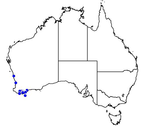 distribution map showing range of Melaleuca blaeriifolia in Australia