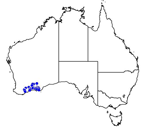 distribution map showing range of Melaleuca bromelioides in Australia