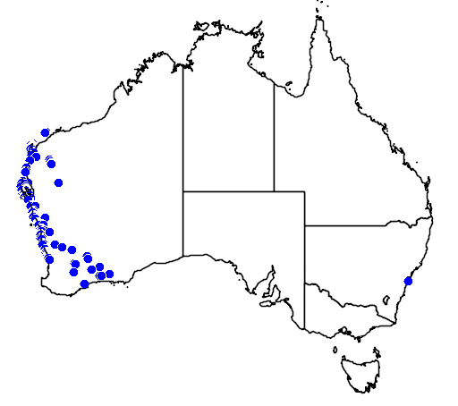 distribution map showing range of Melaleuca cardiophylla in Australia