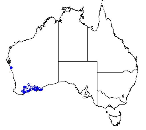 distribution map showing range of Melaleuca cucullata in Australia