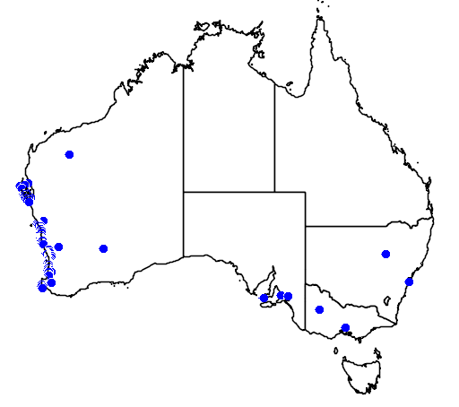 distribution map showing range of Melaleuca huegelii in Australia