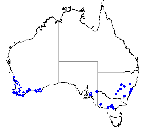 distribution map showing range of Melaleuca incana in Australia