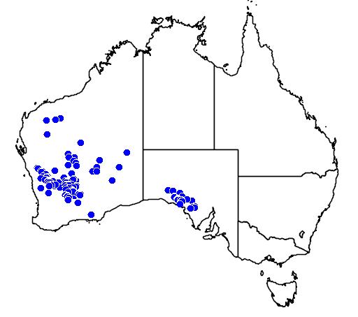 distribution map showing range of Melaleuca leiocarpa in Australia