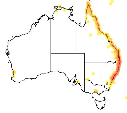 distribution map showing range of Melaleuca quinquenervia in Australia