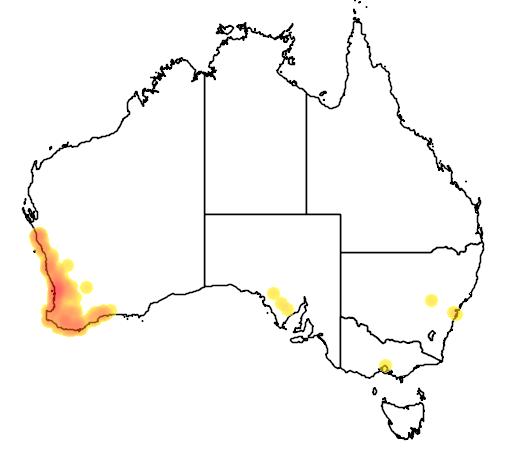 distribution map showing range of Melaleuca rhaphiophylla in Australia