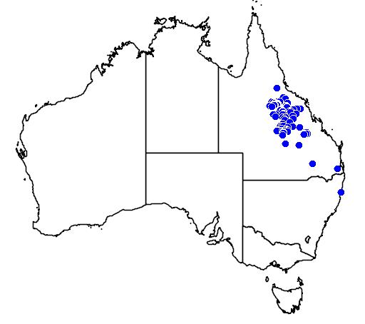 distribution map showing range of Melaleuca tamariscina in Australia