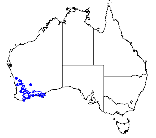distribution map showing range of Melaleuca undulata in Australia