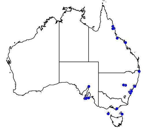 distribution map showing range of Meleagris gallopavo in Australia