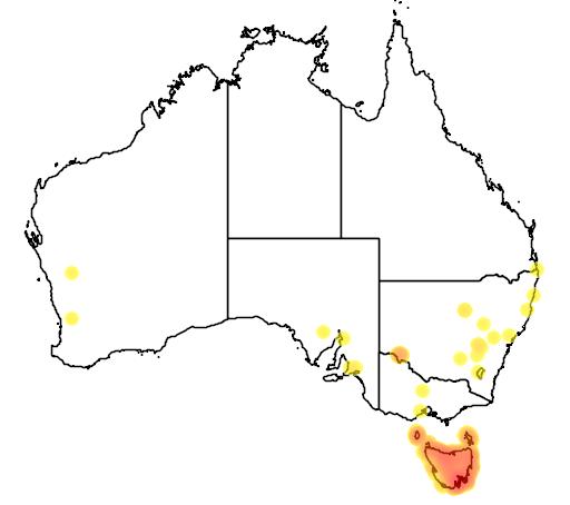 distribution map showing range of Melithreptus affinis in Australia