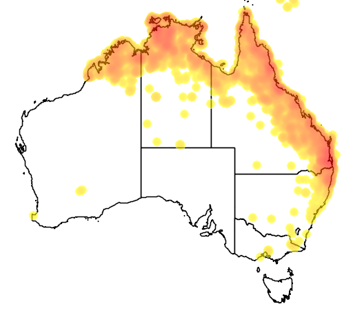 distribution map showing range of Melithreptus albogularis in Australia
