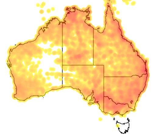 distribution map showing range of Merops ornatus in Australia