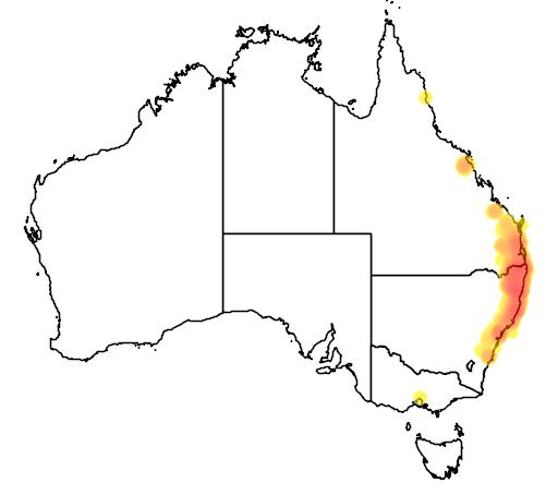 distribution map showing range of Mixophyes fasciolatus in Australia