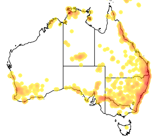 distribution map showing range of Morelia amethistina in Australia