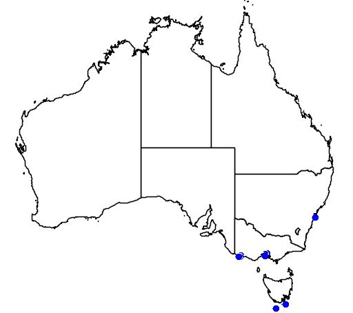 distribution map showing range of Morus capensis in Australia
