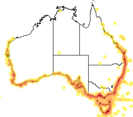 distribution map showing range of Morus serrator in Australia