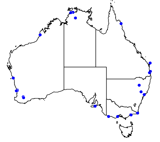 distribution map showing range of Motacilla alba in Australia